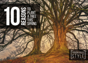 10 reasons to plant a tree this spring - Hudson Valley Style Magazine