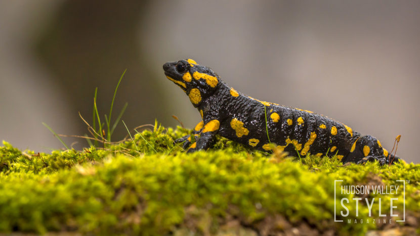 The real Dangers of Picaridin - Fire Salamander